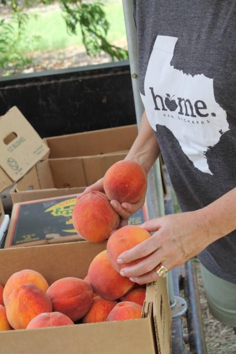 Box of fresh picked peaches
